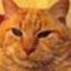 /~shared/avatars/11001232734480/avatar_1.img