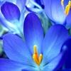 /~shared/avatars/27842879495845/avatar_1.img