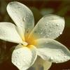 /~shared/avatars/30383648504199/avatar_1.img
