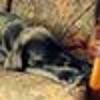 /~shared/avatars/51672279877127/avatar_1.img