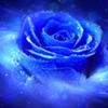 /~shared/avatars/69412098493677/avatar_1.img